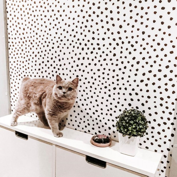 Dots wallpapers